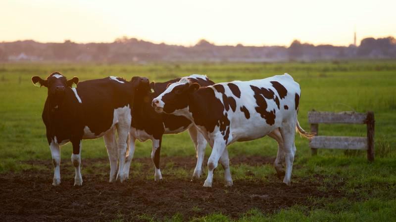 Bursa Uluslararası Hayvancılık ve Ekipmanları Fuarı