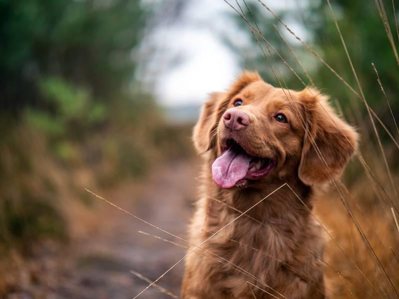 Akdeniz Bölgesi'nin ilk Evcil Hayvan Ürünleri Fuarı PETZOO Antalya 17 Eylül'de Açılıyor
