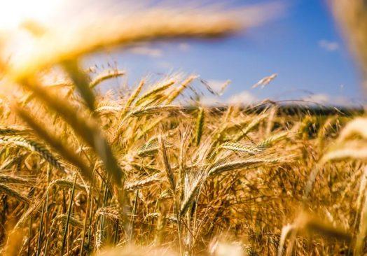 AGROTEC 2020 Uluslararası Tarım ve Tarım Teknolojileri Fuarı