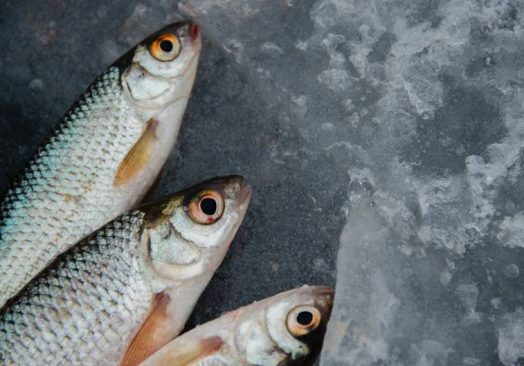 Future Fish Eurasia