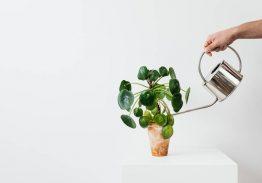 1.000'i yurt dışından yaklaşık 15 bin satın almacı, 160 katılımcı firmayla The Flower and Plant Show'da buluşuyor…